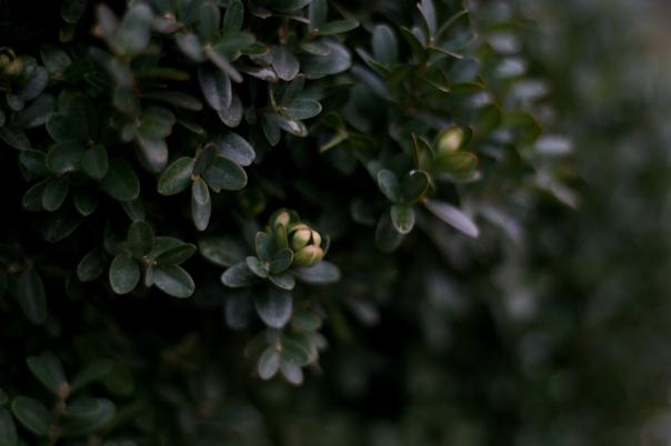 bush macro