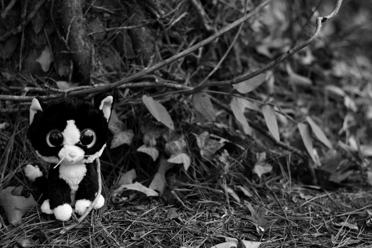 cat black and white