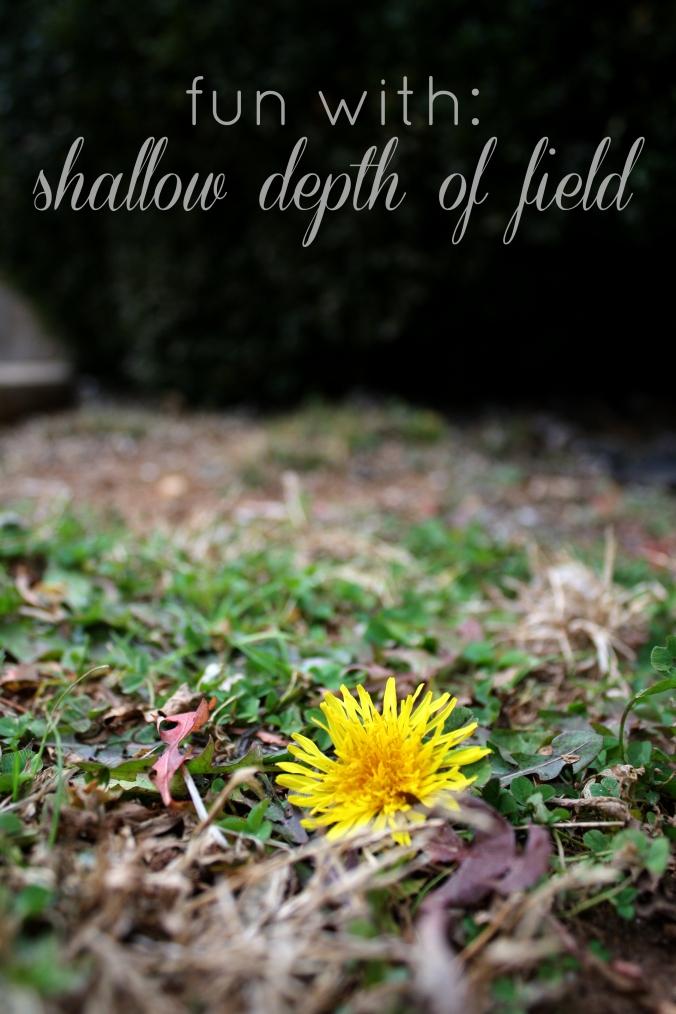 shallow dof