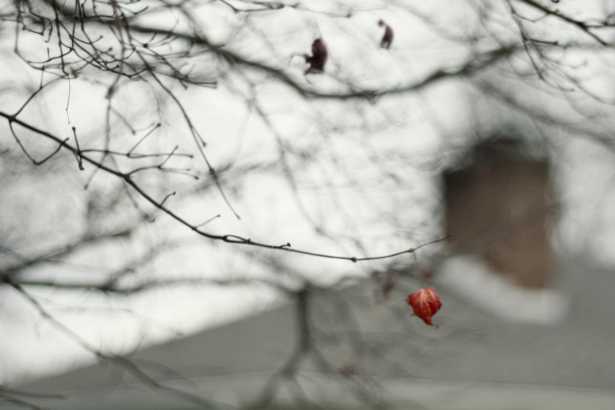 last red leaf