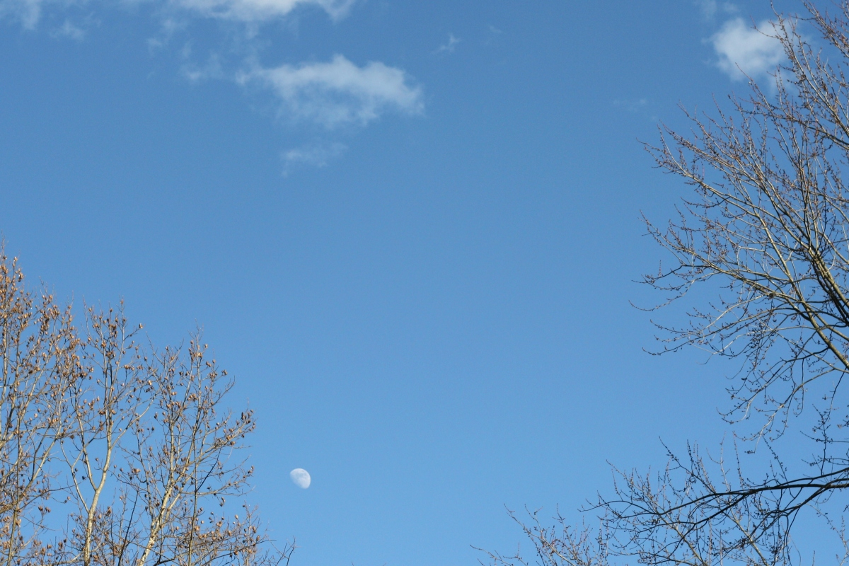 moon in daylight