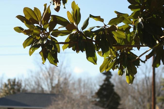 sun sheer leaves