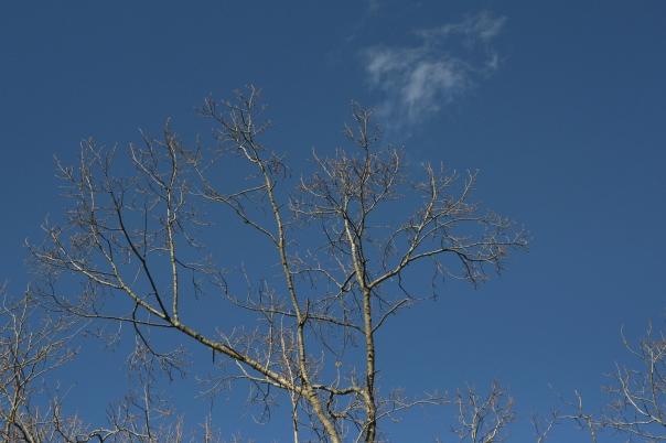stark branch