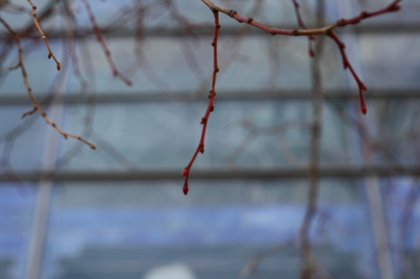blue glass and twigs