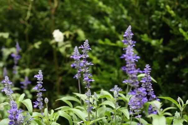 uva flowers, leahwise.com