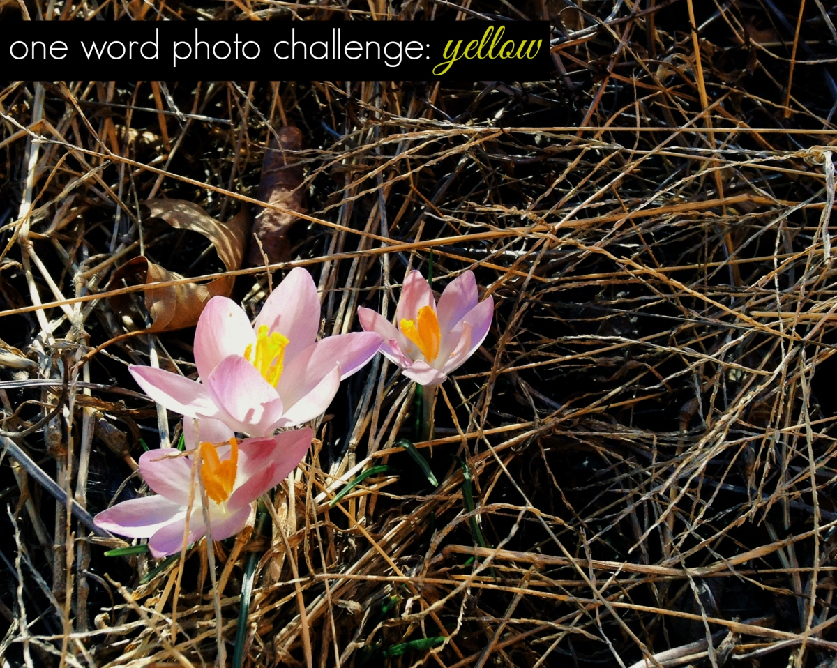 instagram one word photo challenge