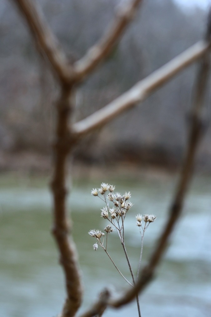 flower by river