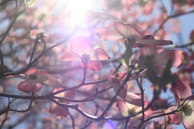 purple flowering tree and light