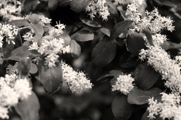 black and white floral photo by leah wise