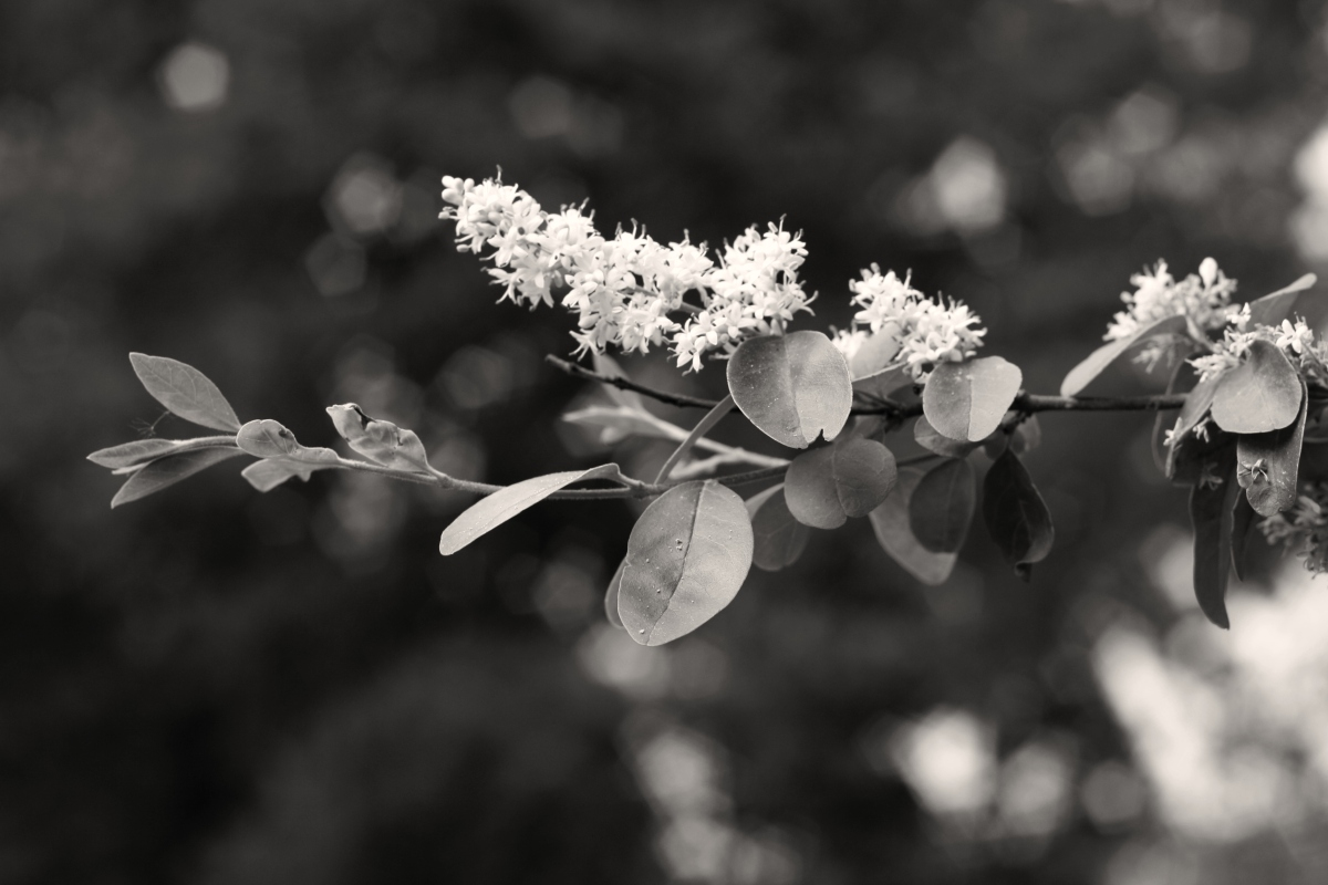 black and white flower by leah wise