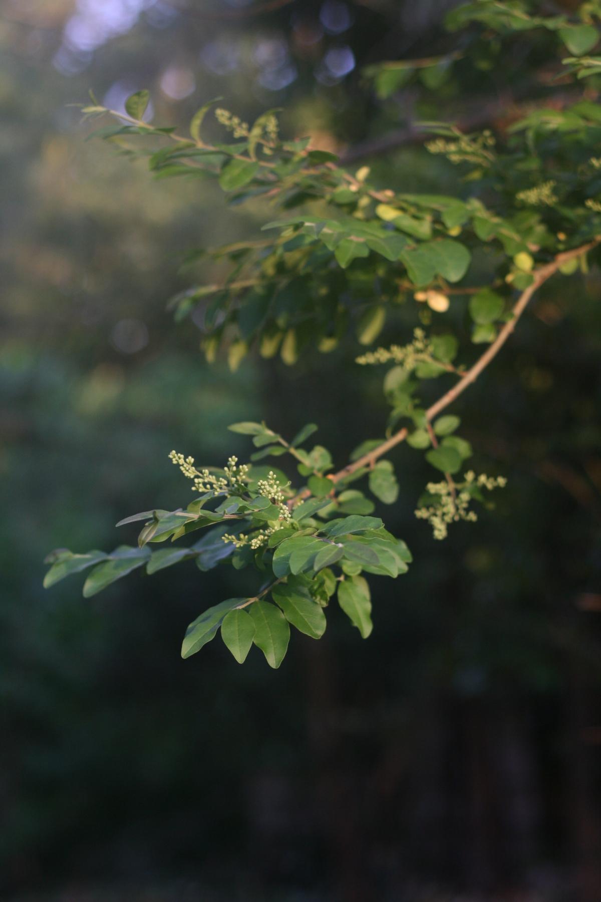 beautiful twig
