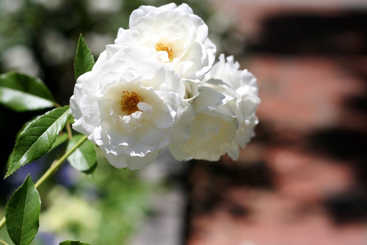 flower at uva